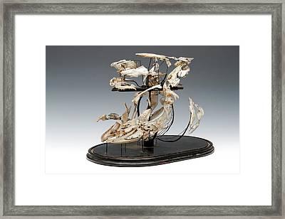 Exploded Fish Skull Framed Print