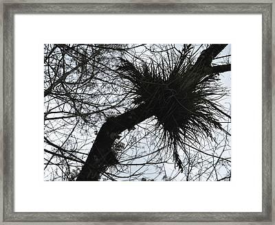 Exploding Branch Framed Print