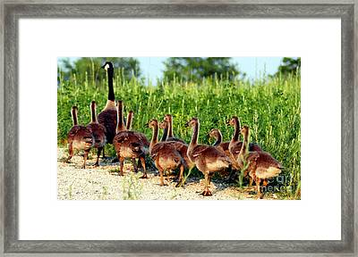 Exploring  101 Framed Print by Optical Playground By MP Ray