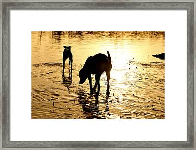 Exploring At Sunset Framed Print