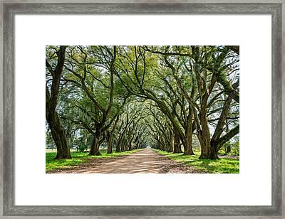 Exploring Louisiana - Oil Paint  Framed Print by Steve Harrington