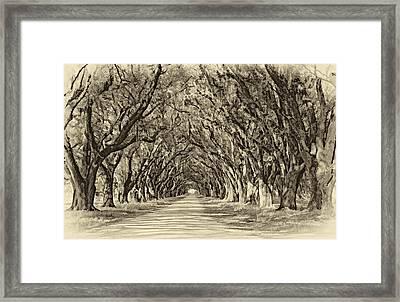 Exploring Louisiana Sepia Framed Print by Steve Harrington