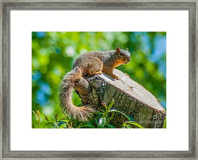 Exploring Framed Print by Optical Playground By MP Ray