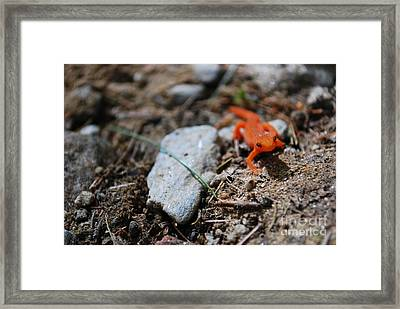 Exploring Framed Print by Susan Hernandez