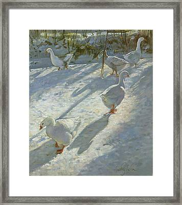 Exploring The Slope Framed Print by Timothy Easton