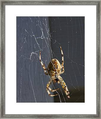 Framed Print featuring the photograph Exploring The Web by Rhonda McDougall