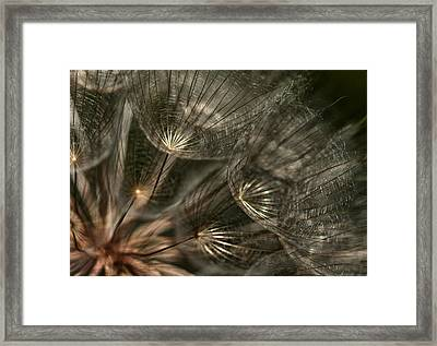 Explosion  Framed Print by Betty Depee