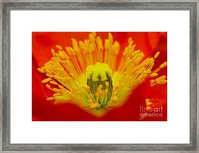 Explosion Of Colour Framed Print by Carole Lloyd
