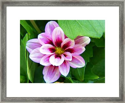 Exquisite Framed Print by Aimee L Maher Photography and Art Visit ALMGallerydotcom
