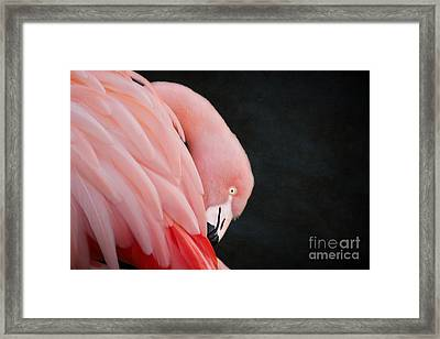 Exquisite Pink Flamingo #5 Framed Print