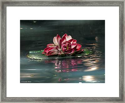 Framed Print featuring the photograph Exquisite Water Flower  by Lucinda Walter
