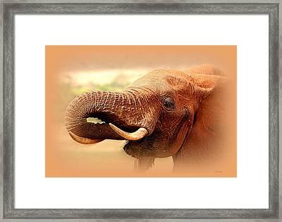 Extinction Is Forever Framed Print