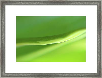 Extreme Close Up Of Blade Of Grass Framed Print by Sheila Creighton / Eyeem