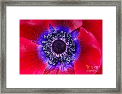 Extreme Macro Of A Red Anemone Poppy Framed Print by Oscar Gutierrez