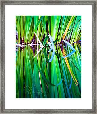 Exuberance Framed Print by Tom Cameron