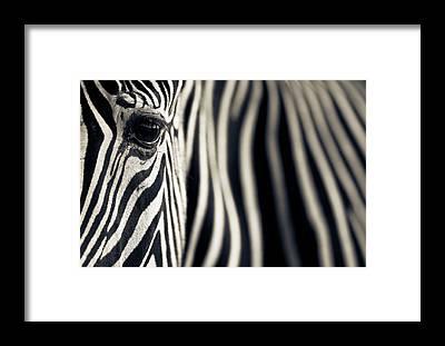 East Africa Framed Prints
