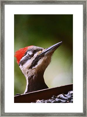 Eye Am Getting Very Sleepy Framed Print by Kym Backland