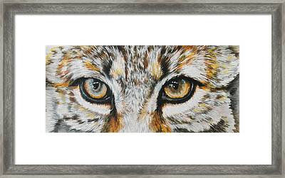 Eye-catching Bobcat Framed Print by Barbara Keith