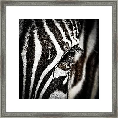 Eye Contact Framed Print by Mike Gaudaur
