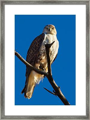 Eye Contact Framed Print by Robert Woodward