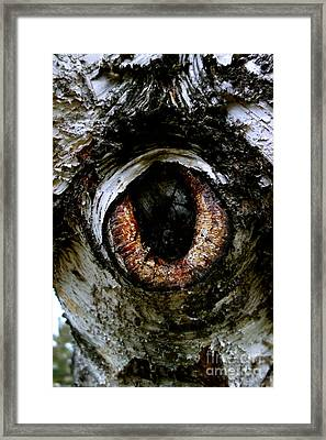Eye In The Tree 1 Framed Print by Jacqueline Athmann