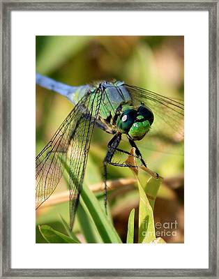 Eye Level Framed Print by Carol Groenen
