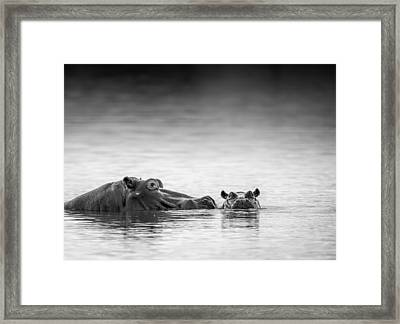 Eye Level Framed Print by Jaco Marx