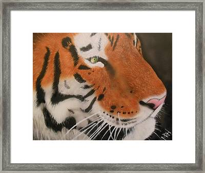 Eye Of A Tiger Framed Print by Michael Hall