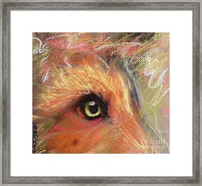 Eye Of Fox Framed Print