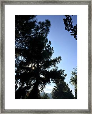 Eye Of Pine On Valleyheart Drive Framed Print