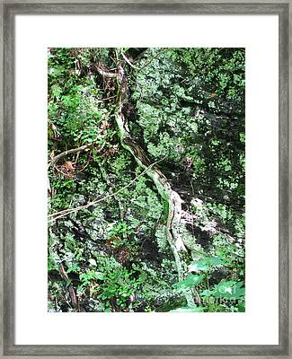 Eye Of Root Framed Print by Melissa Stoudt
