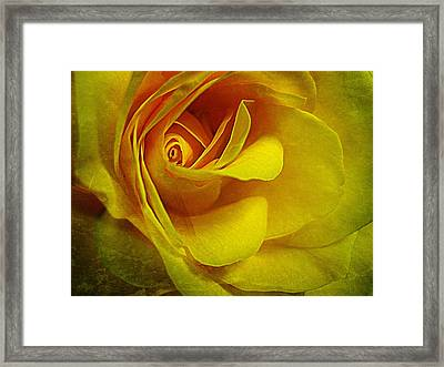 Eye Of Rose Framed Print