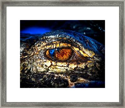Eye Of The Apex Framed Print by Mark Andrew Thomas