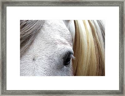 Eye Of The Beholder Framed Print