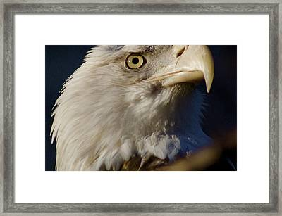 Eye Of The Eagle Framed Print