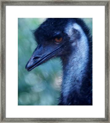 Eye Of The Emu Framed Print by DerekTXFactor Creative