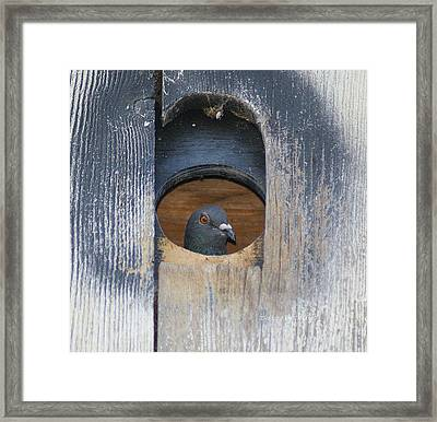 Framed Print featuring the photograph Eye Of The Eye by Debby Pueschel