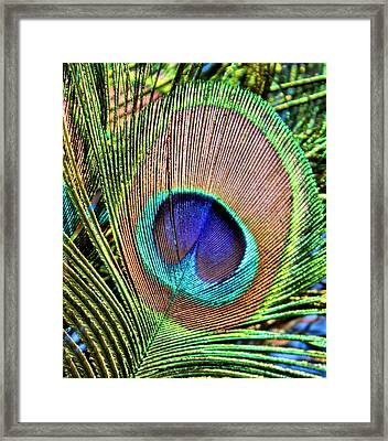 Eye Of The Feather Framed Print by Kristin Elmquist