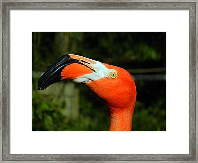 Framed Print featuring the photograph Eye Of The Flamingo by Bill Swartwout