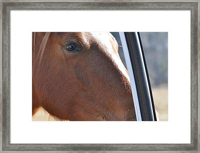 Eye Of The Horse -  Equine 6258 Framed Print by Paul Lyndon Phillips