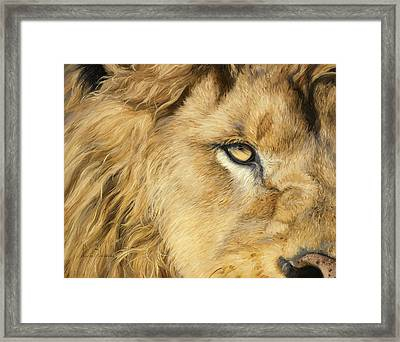 Eye Of The Lion Framed Print by Lucie Bilodeau
