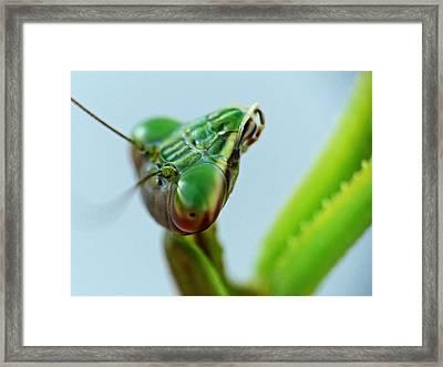 Eye Of The Mantis Framed Print