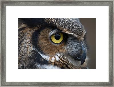 Eye Of The Owl Framed Print by Craig Brown