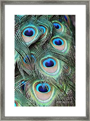 Framed Print featuring the photograph Eye Of The Peacock #2 by Judy Whitton