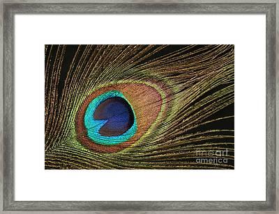 Eye Of The Peacock #5 Framed Print
