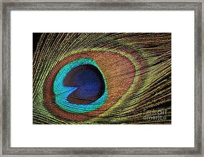 Eye Of The Peacock Framed Print by Judy Whitton