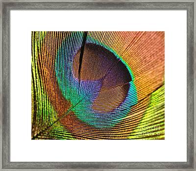 Eye Of The Peacock Framed Print