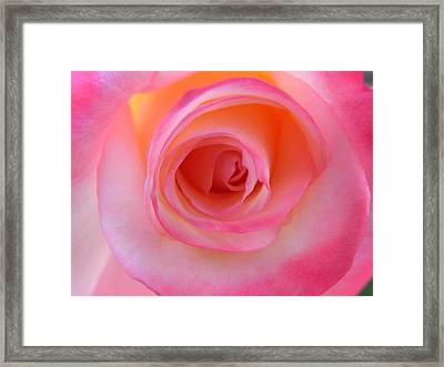 Framed Print featuring the photograph Eye Of The Rose by Deb Halloran