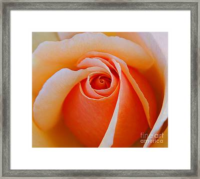 Eye Of The Rose Framed Print