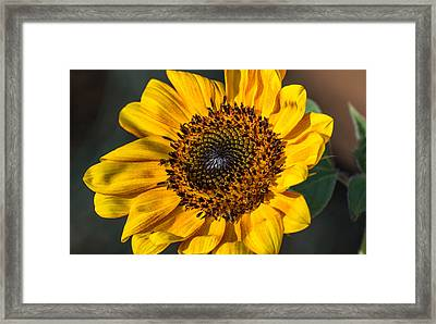 Eye Of The Sun Framed Print by Michael Moriarty